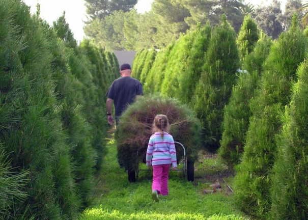 Christmas Tree Farms Near Me.Grinch S Christmas Trees Great Selection Of Trees That Are Freshly Cut From Oregon